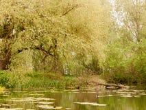 与鸭子春天l的一个可爱的乡下公园河小河场面 库存照片