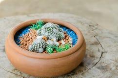 与鸭子木偶雕塑的Mammillaria humboldtii在罐 库存照片