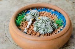 与鸭子木偶雕塑的Mammillaria humboldtii在罐 免版税库存图片