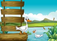 与鸭子的一块空的牌 免版税库存照片