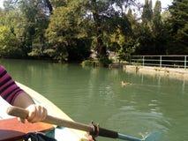 与鸭子的划船 库存图片