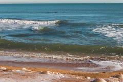 与鸭子的海边风景 免版税库存图片