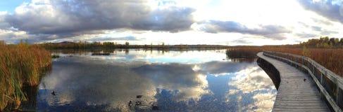 与鸭子的秋天风景 库存图片