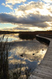 与鸭子的秋天风景 库存照片