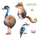 与鸸、numbat、kookaburra和石头的逗人喜爱的收藏 向量例证