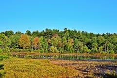 与鹅的秋天风景 免版税图库摄影