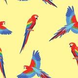 与鹦鹉的样式 无缝的纹理 向量例证