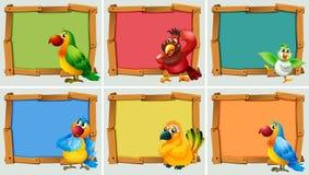 与鹦鹉的框架设计 库存例证