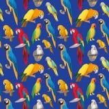 与鹦鹉鸟的无缝的五颜六色的热带样式 库存图片