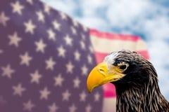 与鹰的美国国旗 免版税库存照片