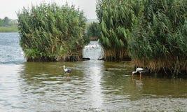 与鹳的河风景 免版税库存照片