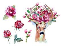 与鹿的传染媒介水彩手拉的花卉集合 图库摄影