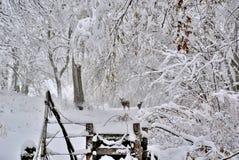 与鹿的冬天雪在乡下公路 图库摄影