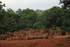 与鹿的风景照片 库存图片