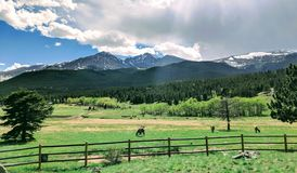 与麋绿色草甸和牧群的山脉  库存照片