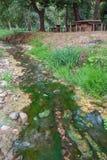 与麝香的绿色溪 免版税库存照片