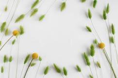 与麦子和花的耳朵的框架在白色背景 库存图片