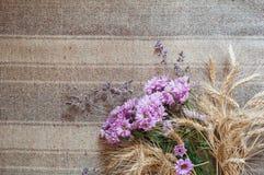 与麦子的干燥黄色耳朵的桃红色菊花在背景的与粗麻布 免版税库存图片