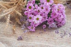 与麦子的干燥黄色耳朵的桃红色菊花在背景的与粗麻布 图库摄影