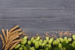 与麦子的耳朵的新鲜的绿色啤酒花球果树在黑木背景的 与拷贝空间的顶视图您的文本的 免版税库存照片