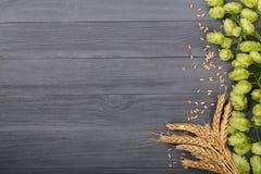 与麦子的耳朵的新鲜的绿色啤酒花球果树在黑木背景的 与拷贝空间的顶视图您的文本的 库存照片