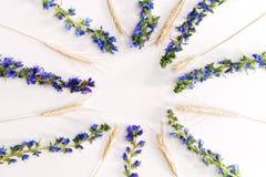 与麦子紫罗兰色领域花和片断的框架  免版税库存照片