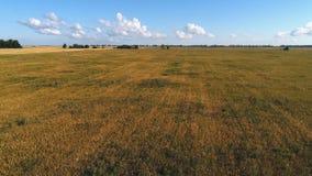 与麦田的美好的农田风景和森林鸟瞰图调遣 股票录像