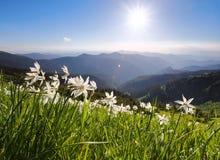 与黄水仙的草 蓝天 与高山的风景 森林酸值mak路 Eco手段,为游人放松 蓝色域绿色风景天空夏天 免版税库存照片