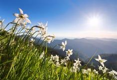 与黄水仙的草 蓝天 与高山的风景 森林酸值mak路 Eco手段,为游人放松 蓝色域绿色风景天空夏天 库存照片