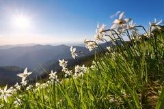 与黄水仙的草 蓝天 与高山的风景 森林酸值mak路 Eco手段,为游人放松 蓝色域绿色风景天空夏天 免版税图库摄影