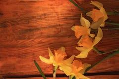 与黄水仙花束的花背景在木桌上 库存图片