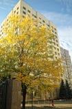 与黄色叶子的树在一个现代大厦的背景 免版税库存照片