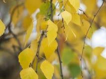 与黄色叶子的秋天剪影 图库摄影
