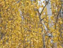 与黄色叶子的秋天剪影 免版税库存图片
