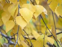 与黄色叶子的秋天剪影 库存照片