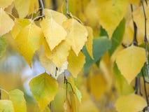与黄色叶子的秋天剪影 免版税库存照片
