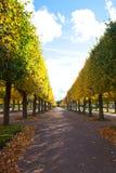 与黄色叶子的秋天胡同 免版税库存图片