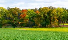 与黄色和桔子叶子的秋天树 免版税库存照片