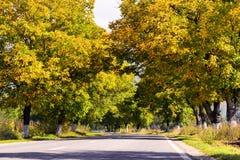 与黄色和棕色叶子的美好的秋天风景 库存照片