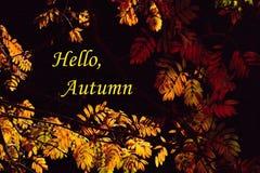 与黄色和橙色叶子的秋天背景在黑暗的背景 免版税库存照片