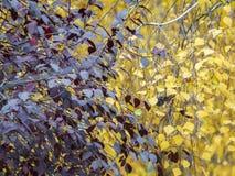 与黄色和红色叶子的秋天剪影 图库摄影