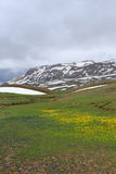 与黄色和蓝色花和熔化的雪的山风景 免版税库存图片