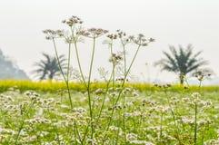 与黄色强奸的五颜六色的春天风景:这是从一个晴朗的领域夺取的美好的油菜籽花田的照片  免版税图库摄影
