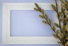 与黄色杨柳-蓝色背景的芽分支的白色框架在桃红色的 拷贝空间在您的文本的中部 库存图片