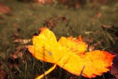 与黄色树和叶子的美好的秋天风景 库存照片