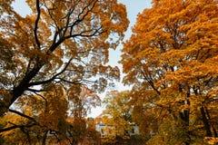 与黄色树和太阳的美好的秋天风景 落的叶子自然本底 库存照片