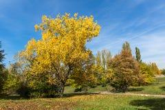 与黄色树在南方公园,索非亚,保加利亚的秋天风景 库存图片