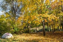 与黄色树在南方公园,索非亚,保加利亚的秋天风景 免版税库存照片