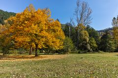 与黄色树的秋天风景在Pancharevo湖,索非亚附近城市地区 免版税图库摄影