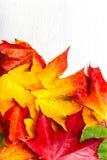 与黄色槭树的秋天构成在白色木tabl离开 图库摄影